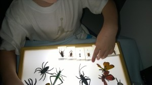 The insects in resin were a wonderful catalyst for discussion about each insect (and fun to build towers with too!)